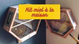 kit miel a la maison