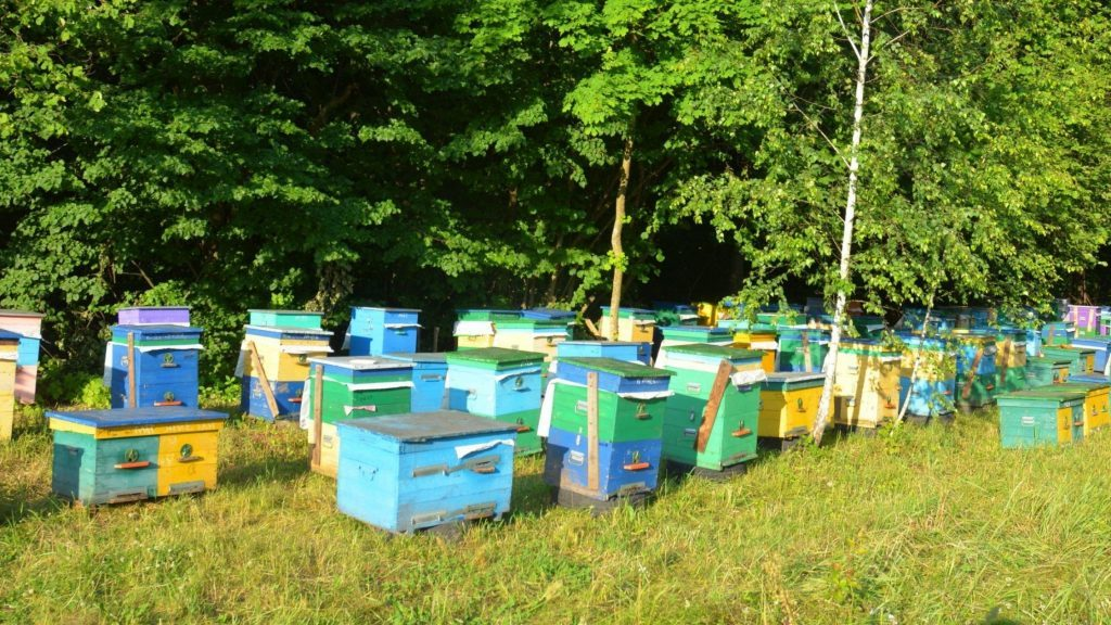 miel de tilleul ruches